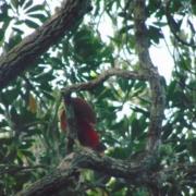 BIRDWATCHING RAJA AMPAT